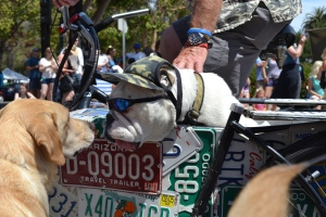 Simba met this guy riding in the sidecar of his owner's bike.